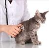 Ветеринарные клиники в Сычевке